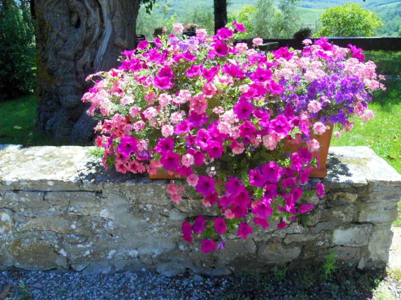 fioriture stagionali