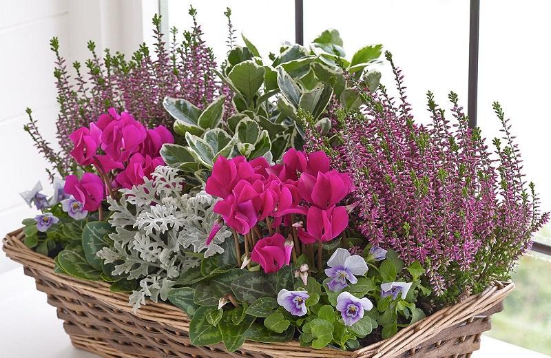 Composizioni d'autunno: cosa metteremo nei nostri vasi?
