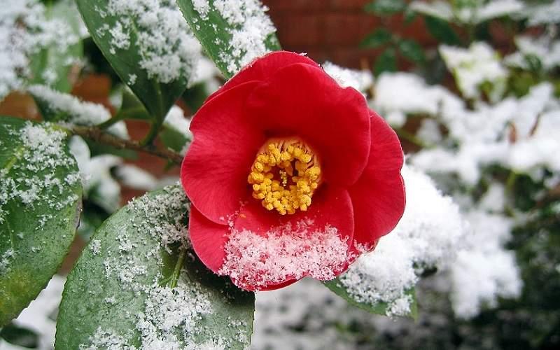 Proteggere le piante dall'inverno -2