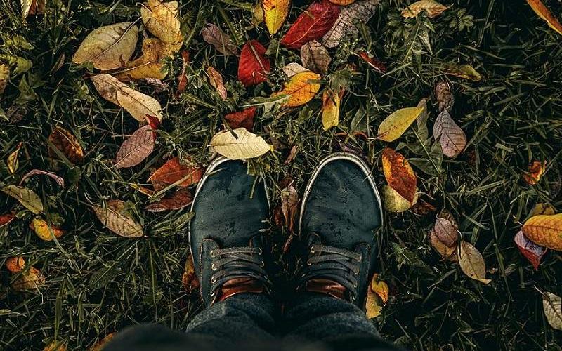 Piantare cespugli in autunno: sì o no?