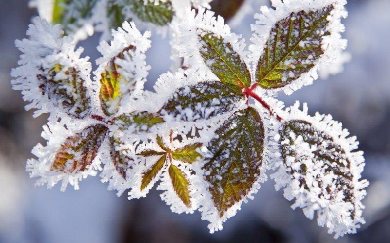 Proteggere le piante dall'inverno -1
