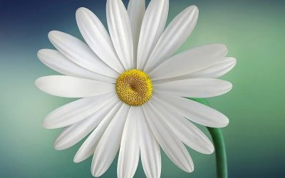 Pasqua e fiori