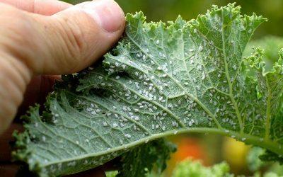 Le avversità delle piante, proviamo a fare chiarezza