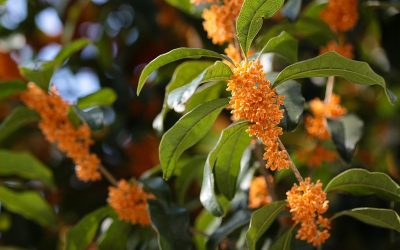 I cespugli a fioritura estiva (seconda parte)
