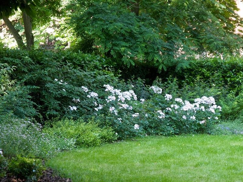 Ferie di Agosto in giardino ed in terrazzo